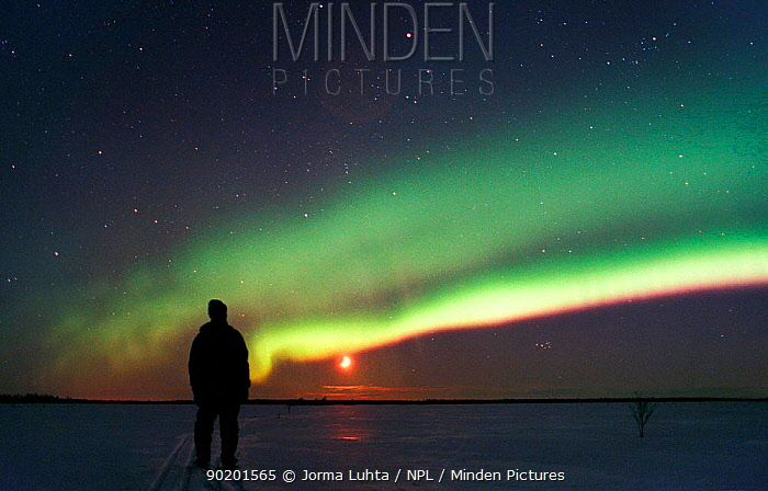 Person watching Aurora borealis colours in night sky, northern Finland, winter  -  Jorma Luhta/ npl