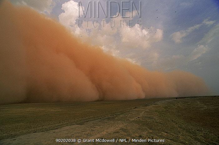 Dust storm preceeding thunderstorm in the Sahel, Mali  -  Grant Mcdowell/ npl