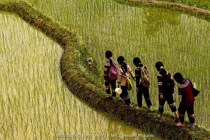 Yi Ethnic minority women walking along ridge between flooded rice terraces Yuanyang, Honghe Prefecture, Yunnan Province, China 2006  -  Pete Oxford/ npl