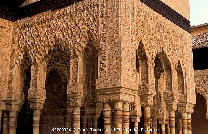 Stone carvings, The Palace of the Lions, The Alhambra, Granada, Spain  -  Frank Tomlinson/ npl
