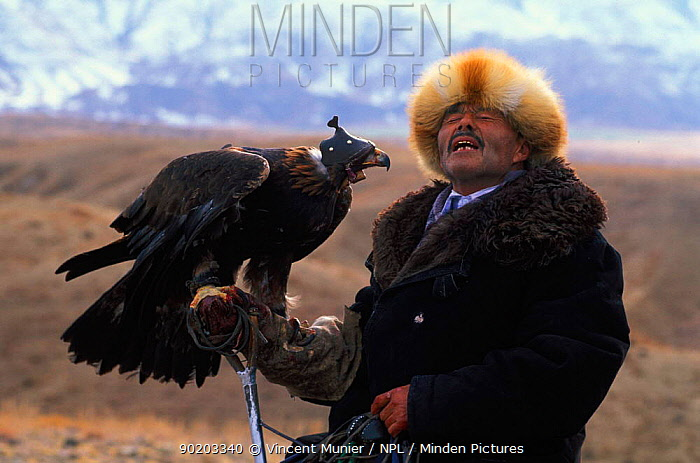 Kazakh hunter with Golden eagle trained to hunt wolf and fox for fur, Kazakhstan, Asia  -  Vincent Munier/ npl