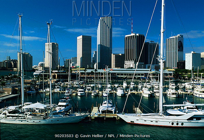 Miami harbour, Florida, USA  -  Gavin Hellier/ npl