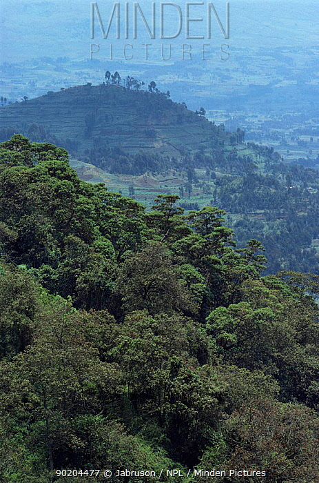 Deforestation of national park for subsistence agriculture, Parc des Volcans National Park, Rwanda  -  Jabruson/ npl