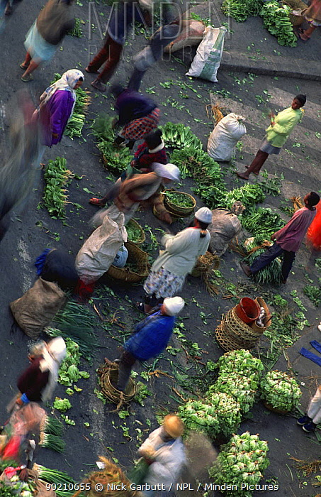Early morning vegetable market, Antananariva, Madagascar  -  Nick Garbutt/ npl