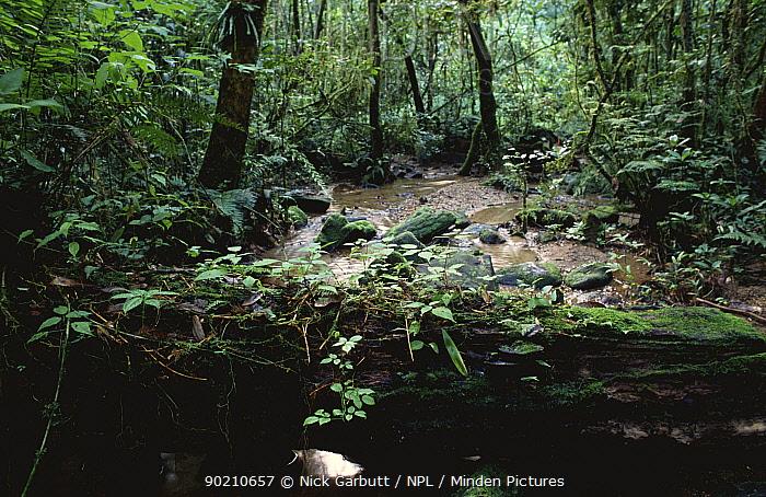 Log fallen across stream in rainforest, Ranomafana Nationalo Park, Madagascar  -  Nick Garbutt/ npl