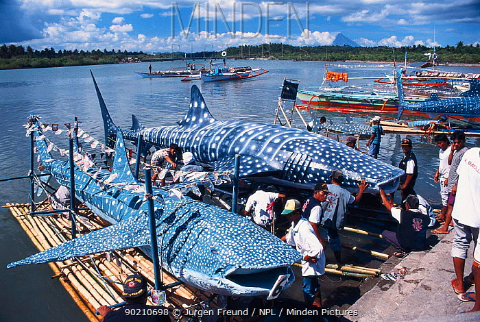 Whale shark models made of bamboo and rice sack material for whale shark festival in Donsol, a small fishing village in the Philippines 2002  -  Jurgen Freund/ npl