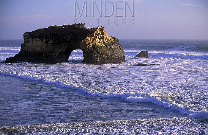 Natural rock arch in surf, Natural Bridges State Park, Santa Cruz, California, USA  -  Pete Oxford/ npl