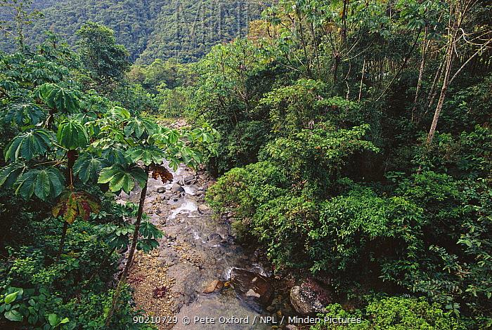 Cloud forest stream Manu National Park, Peru, South America  -  Pete Oxford/ npl