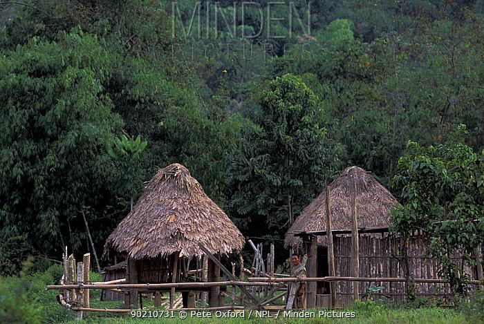 Machiguenga indian huts, Timpia community, Lower Urubamba river, Amazonia, Peru  -  Pete Oxford/ npl