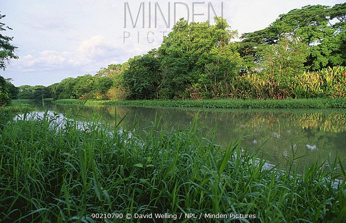 River landscape, Hato San Antonio, Arismende, Venezuela, South America  -  David Welling/ npl