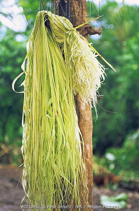Chambira palm leaf strands drying, used to make hammocks and bags, Llanchamacocha Ecuadorian Amazon  -  Pete Oxford/ npl