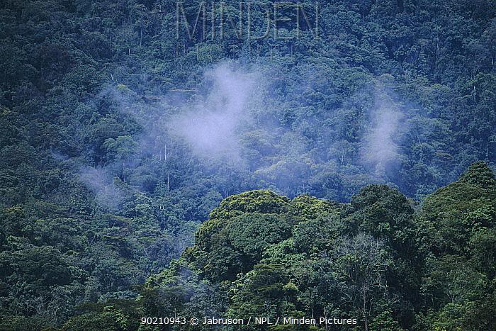 Bwindi 'impenetrable' forest NP, Uganda Park threatened by local population pressure  -  Jabruson/ npl