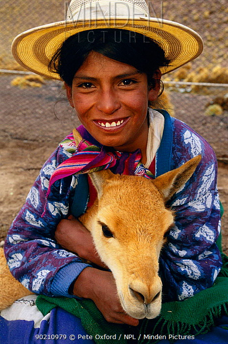 Girl holding wild Vicuna captured for shearing (Lama vicugna) SW Bolivia, South America, to benefit Guadalupe community Dept Potosi 4800m  -  Pete Oxford/ npl