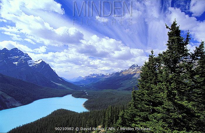 Looking down to Peyto Lake, Banff National Park, Alberta, Canada, North America  -  David Noton/ npl