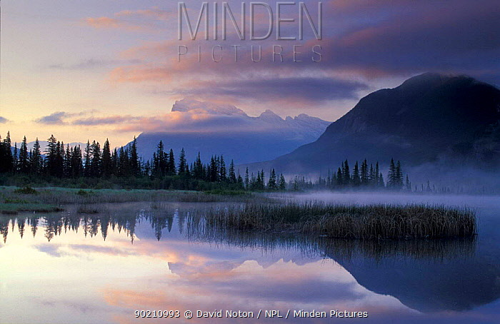Mount Rundle at dawn, Banff National Park, Alberta, Canada  -  David Noton/ npl