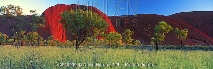 Panoramic view of Ayer's rock (Uluru) Northern Territories, Australia  -  David Noton/ npl