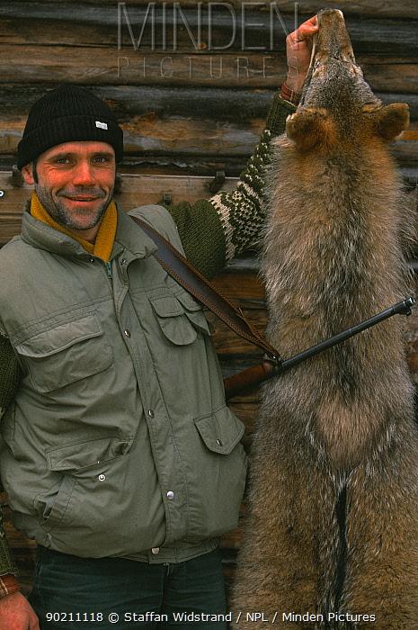 Wolf hunter with skin from shot wolf (Canis lupus) Ugis Bergmanis, Latvia  -  Staffan Widstrand/ npl