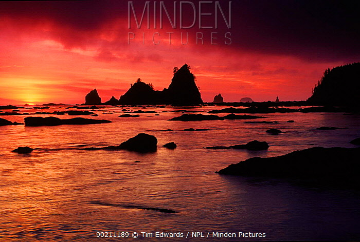Olympic NP at sunset Washington, USA  -  Tim Edwards/ npl