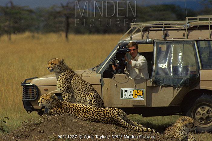Camerman Richard Matthews filming Cheetah (Fundi) with cubs, for Big Cat Diary, Masa Marai Kenya 1990s  -  Chris Taylor/ npl