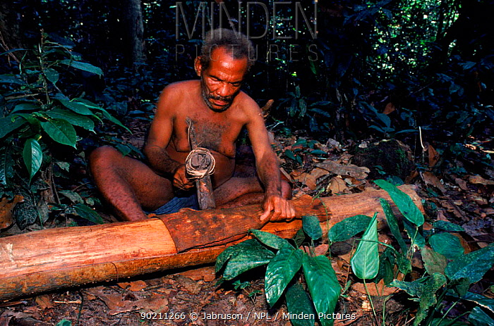 Bambuti pygmy prepares bark cloth using elephant tusk hammer Epulu Ituri reserve, DR Congo (formerly Zaire)  -  Jabruson/ npl
