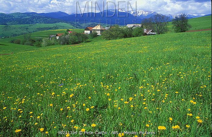 Traditional hay meadow, High Tatra Mountains, Slovakia  -  Pete Cairns/ npl