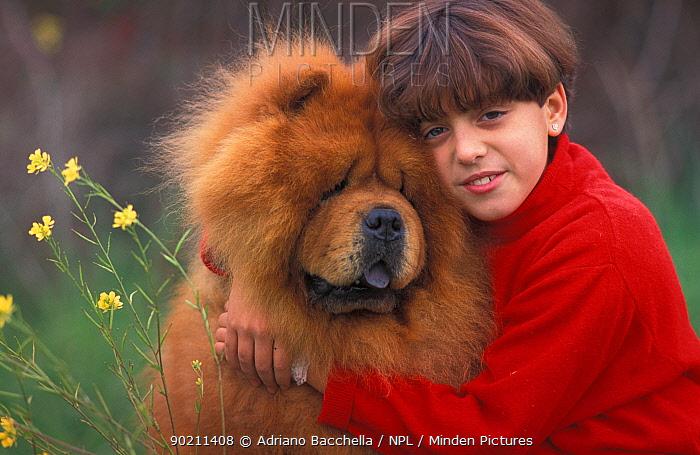 Girl cuddling Chow chow dog, rough coated  -  Adriano Bacchella/ npl