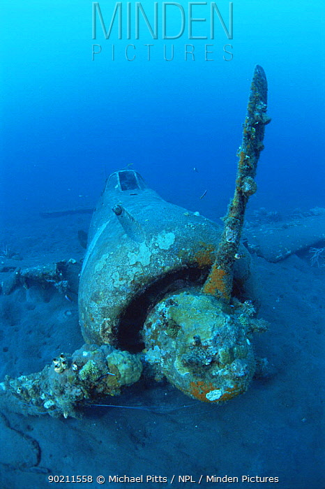 Wreck of the japanese WWII plane, West New Britain, Pacific ocean islands  -  Michael Pitts/ npl