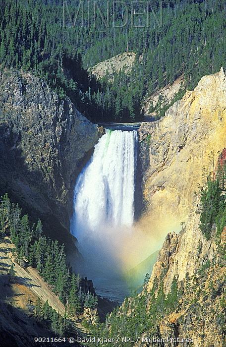 Lower Falls (308 ft) Yellowstone river, Yellowstone National Park, WY, USA  -  David Kjaer/ npl