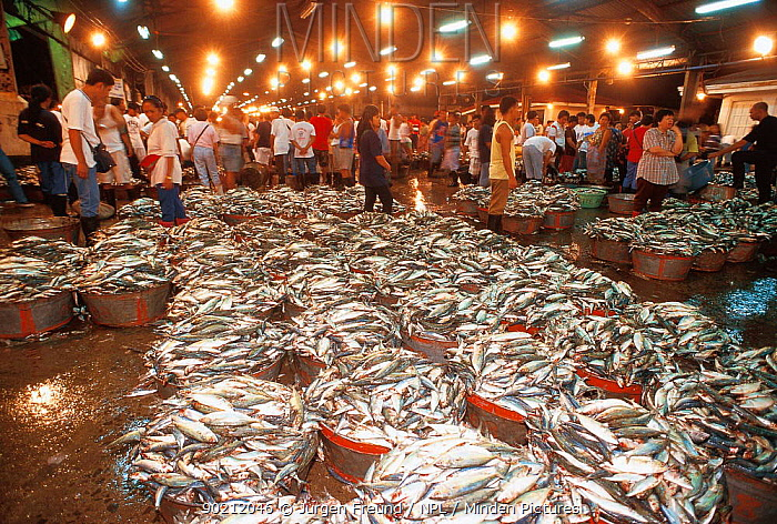 Minden pictures stock photos fish market manila for Freund s fish