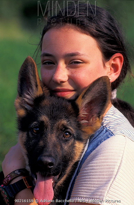 Domestic dog, Alsatian, German Shepherd juvenile held by girl  -  Adriano Bacchella/ npl