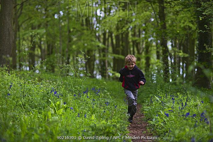 Young boy running through Bluebell (Endymyon nonscriptus) wood Norfolk, UK, May  -  David Tipling/ npl