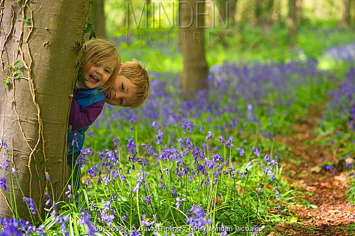 Young boy and girl playing in Bluebell (Endymion nonscriptus) wood, Norfolk, UK, May Model relased  -  David Tipling/ npl