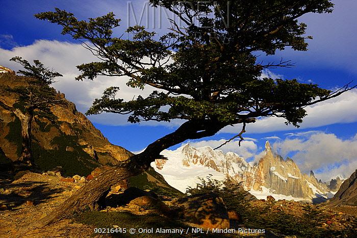 Cerro Torre (3102 m), Los Glaciares National Park, Andes, Patagonia, Argentina, January 2006  -  Oriol Alamany/ npl
