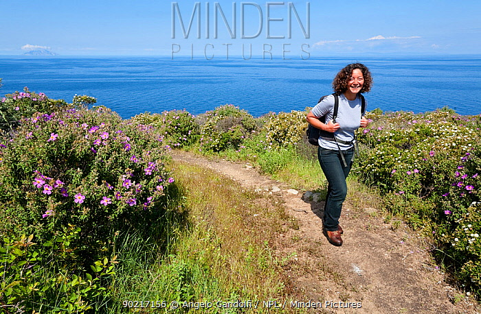 Woman walking through garigue coastland, with flowering rockroses (Cistus) and other plants, Giglio island, National Park of the Tuscany archipelago, Italy, May 2010 Model released  -  Angelo Gandolfi/ npl