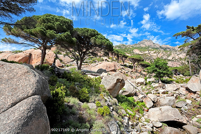 The rugged terrain of Montecristo island, Tuscany Archipelago National Park, Italy June 2010  -  Angelo Gandolfi/ npl