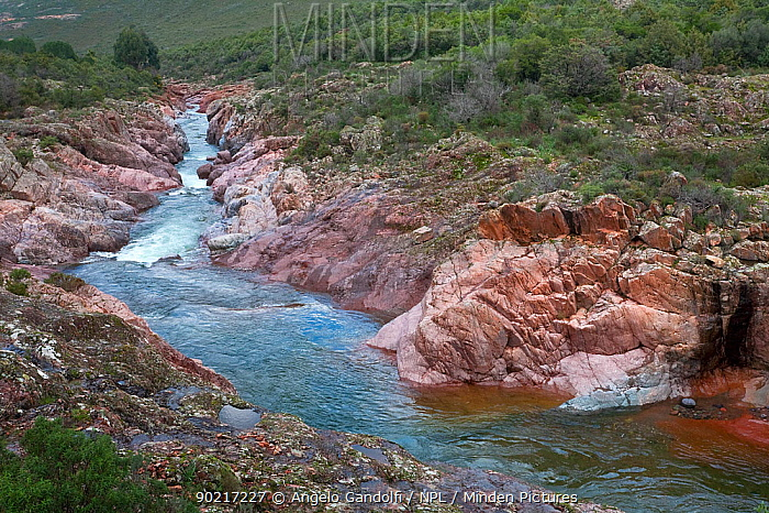 The river Fango in February, Calvi Parc Naturel Regional de Corse, Corsica Island, France, February 2010  -  Angelo Gandolfi/ npl