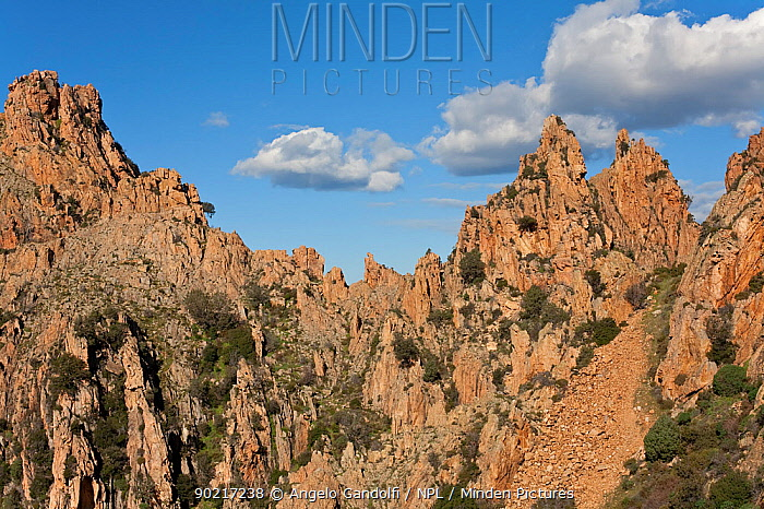 Le Calanche de Piana rocks (Capu Ghineparu area) Gulf of Porto Parc Naturel Regional de Corse, Corsica island, France, February 2010  -  Angelo Gandolfi/ npl