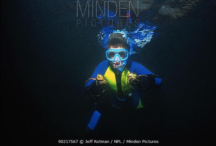 Boy (nine years) free diver holding green crabs, Plum Cove, Gloucester, Massachusetts, USA Model released  -  Jeff Rotman/ npl