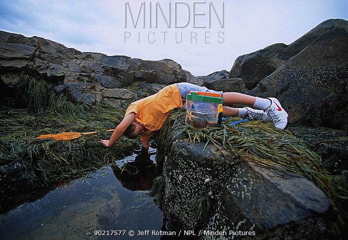 Boy (nine years) reaching into a tidepool, Plum Cove, Gloucester, Massachusetts, USA Model released  -  Jeff Rotman/ npl
