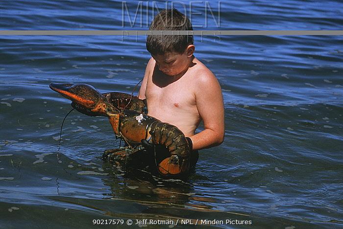 Boy (nine years) holding 14lb Northern lobster (Homarus americanus) Plum Cove, Gloucester, Massachusetts, USA Model released  -  Jeff Rotman/ npl