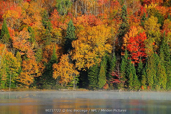 Autumn colour on Modene lake La Mauricie National Park, Quebec, Canada, October 2010  -  Eric Baccega/ npl