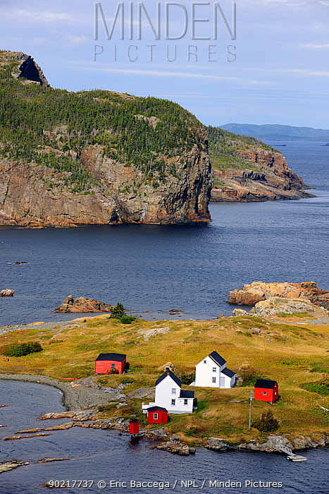 Aerial view of Burden's Point, Salvage village, east coast of Newfoundland, Canada, September 2010  -  Eric Baccega/ npl
