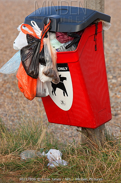 Dog mess bin overflowing, Cley Beach, Norfolk, UK, September 2009  -  Ernie Janes/ npl