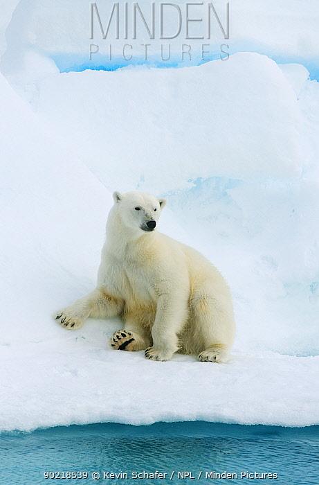 Polar bear (Ursus maritimus) resting on pack ice, Svalbard, Arctic Norway, vulnerable species 2010  -  Kevin Schafer/ npl