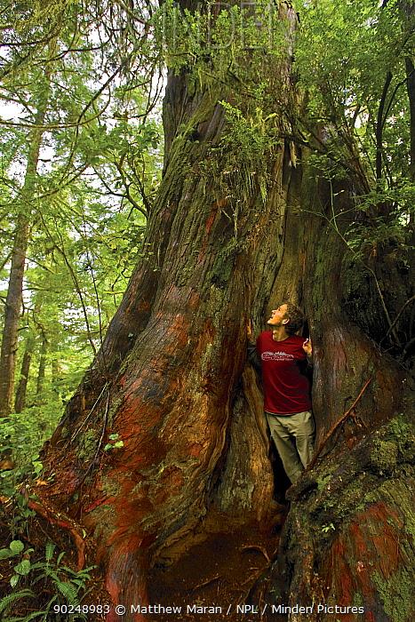 Photographer Matthew Maran in the hollow core of a Western Red Cedar (Thuja plicata) The West Coast Trail, Pacific Rim national Park, Vancouver Island, Canada, September  -  Matthew Maran/ npl
