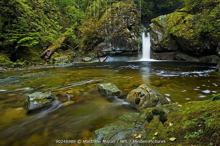 A waterfall at a woodland pool Pacific Rim National Park, Vancouver Island, Canada, September 2010  -  Matthew Maran/ npl