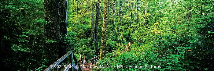 A walkwak on a rainforest trail The West Coast Trail, Pacific Rim National Park Reserve, Vancouver Island, Canada, September 2010  -  Matthew Maran/ npl