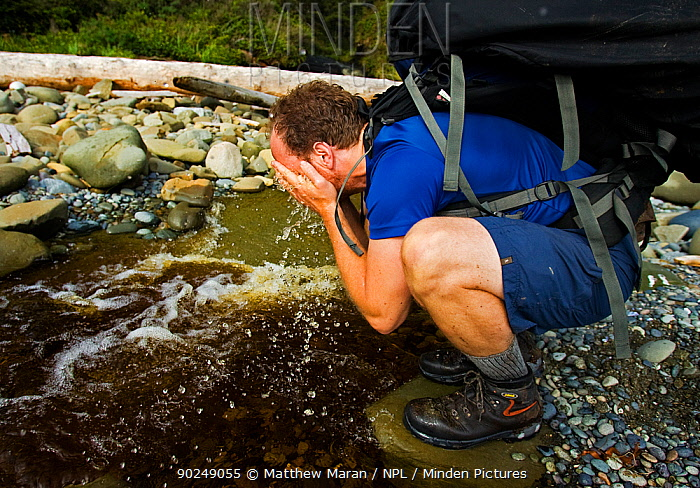 A hiker refreshing himself with water from a woodland stream The West Coast Trail, Pacific Rim National Park, Vancouver Island, Canada, September  -  Matthew Maran/ npl