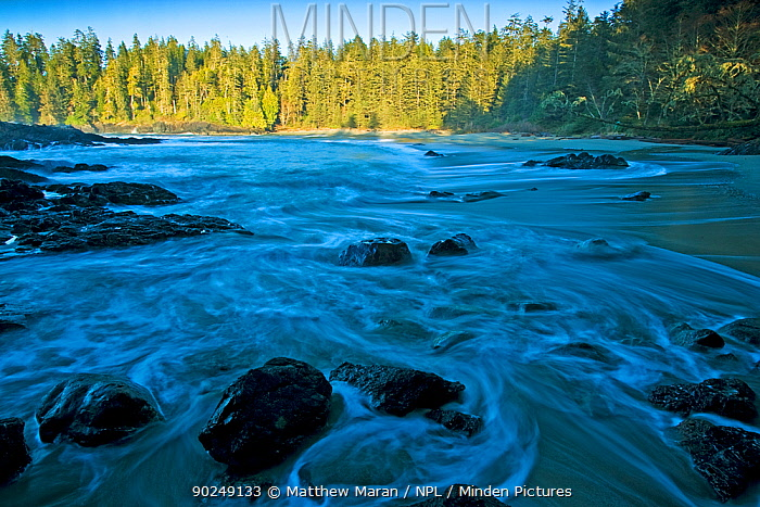 Tidal waters coming into a forested inlet Half Moon Bay, Vancouver Island, Canada, March 2010  -  Matthew Maran/ npl