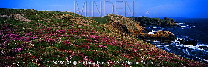 A view of coastal hills with flowering Sea Thrift (Armeria maritima) Skomer, Wales, UK  -  Matthew Maran/ npl